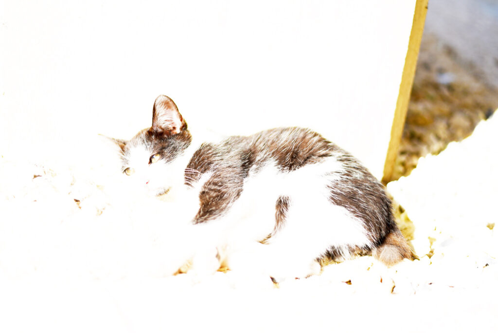 露出オーバーで白とびしている写真