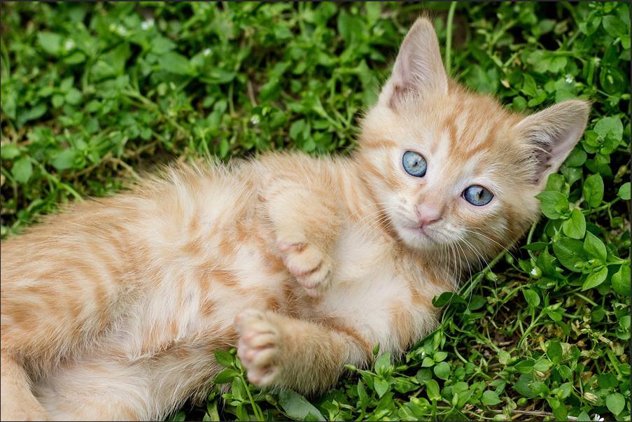 トーンカーブを編集していない猫の写真。若干くすんで見える