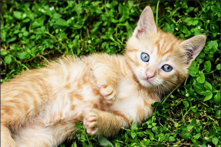 トーンカーブをS字に変更した猫の写真。くすみが取れてメリハリがある