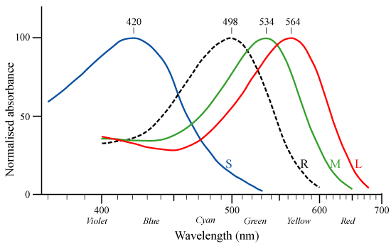 錐体細胞が認識する波長
